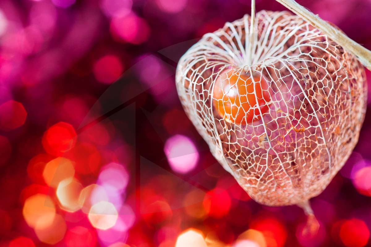 The Beauty of Bokeh